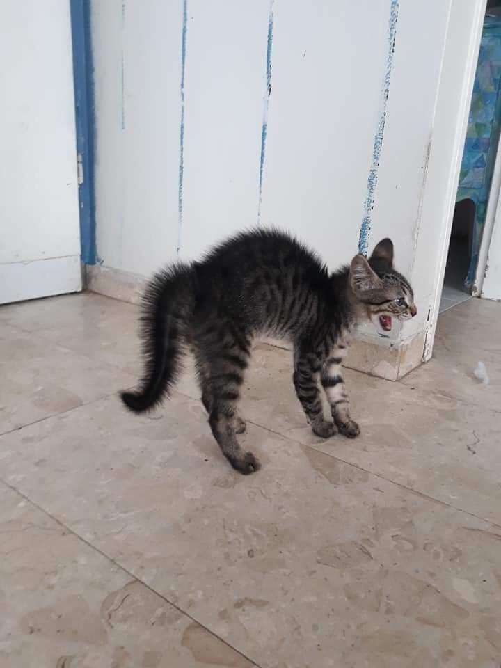 weird cat looks