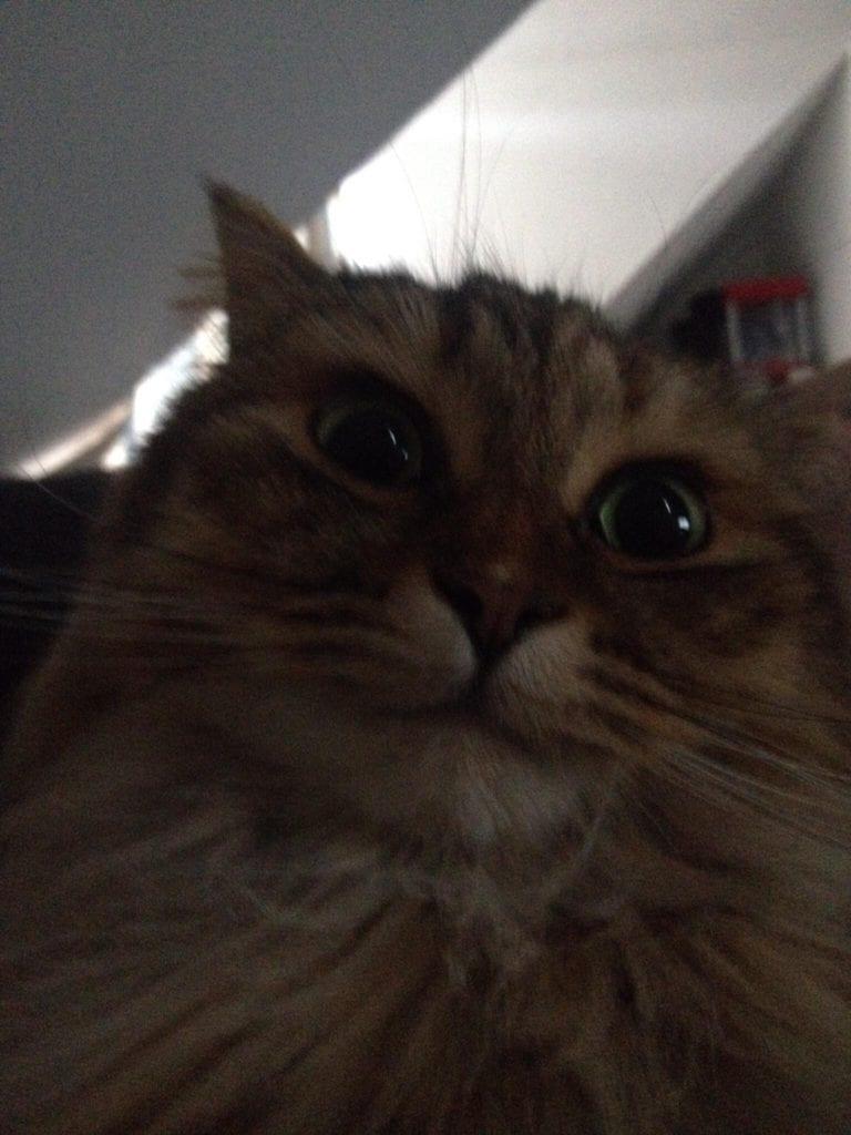 weird cat faces