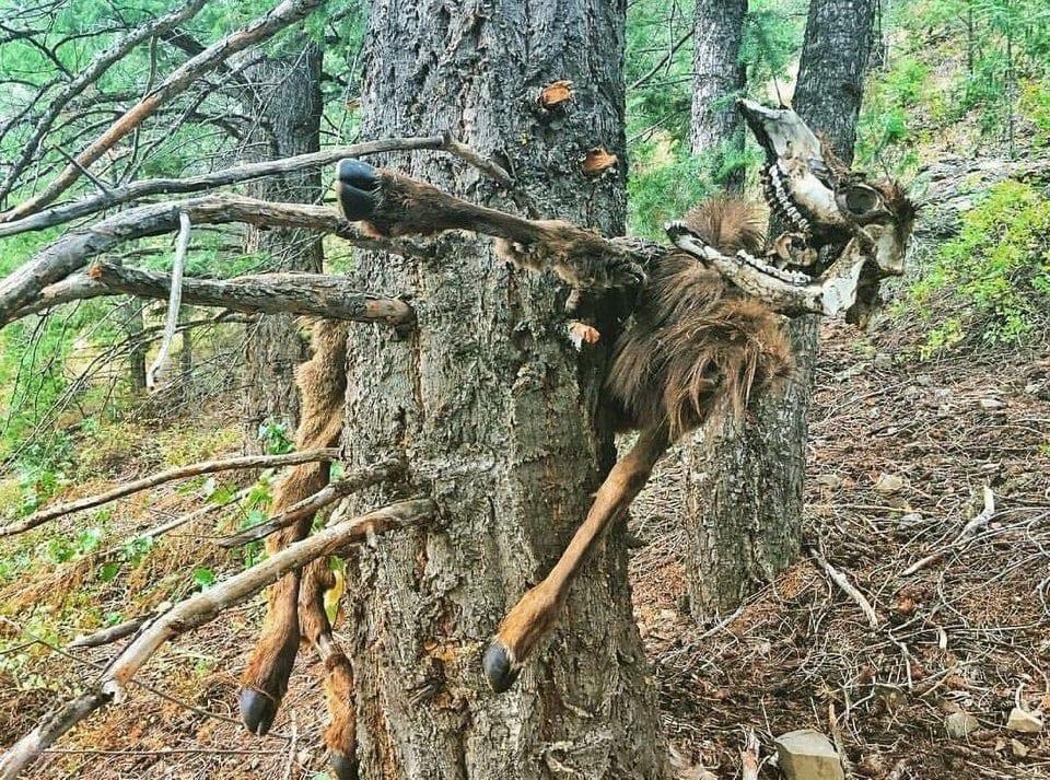 tree eats animal