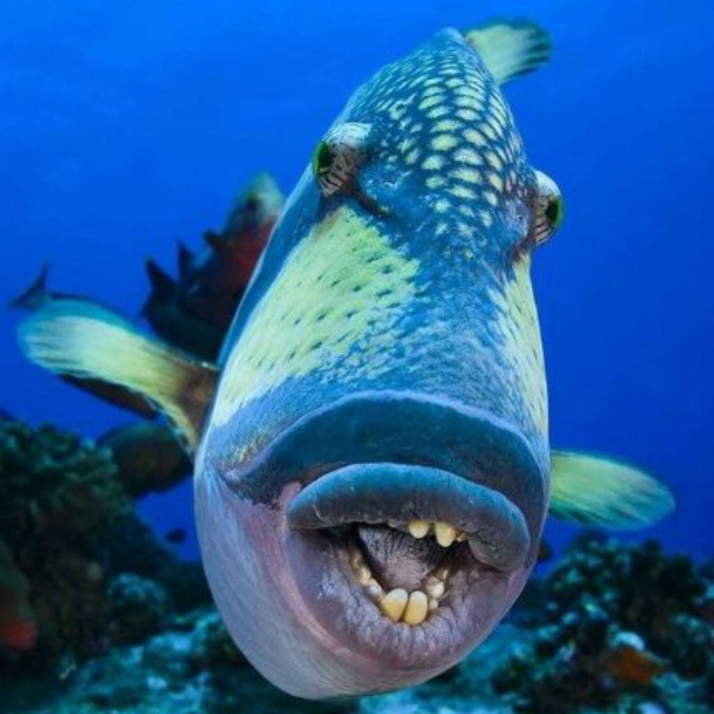 creatures sea weird ocean looking bizarre triggerfish monsters creepy re