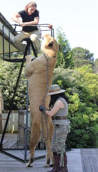 tallest cat in the world
