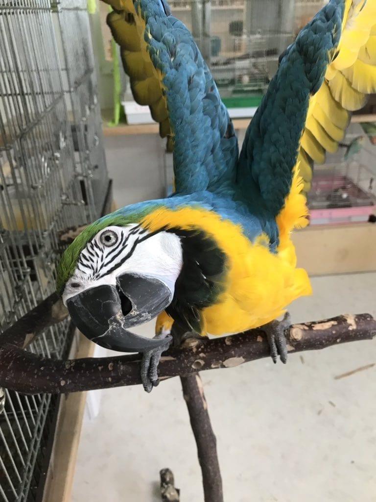 Beautiful Macaws Photos Ever