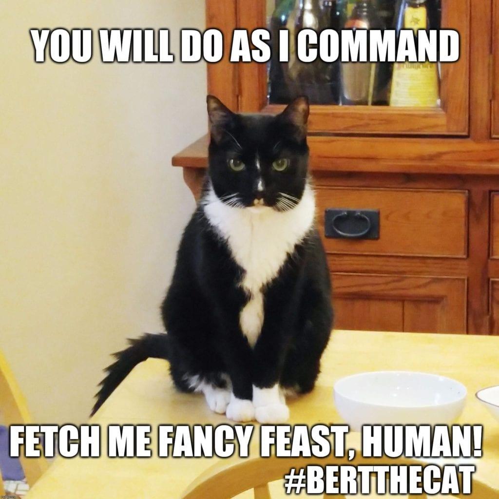 grumpy cat memes 32sd
