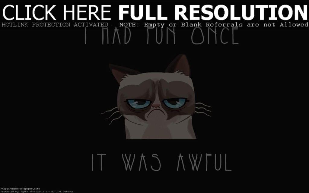 best grumpy cat -1sw