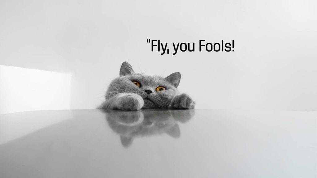 best grumpy cat -1