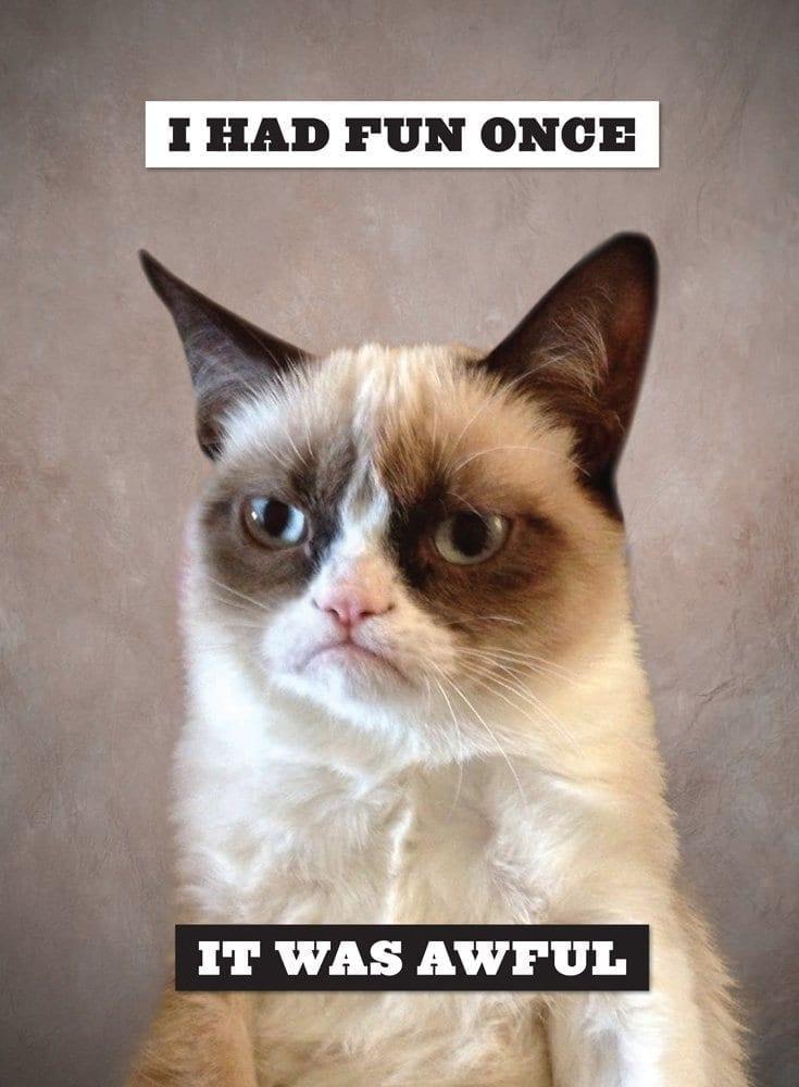 grumpy cat meme dank 4