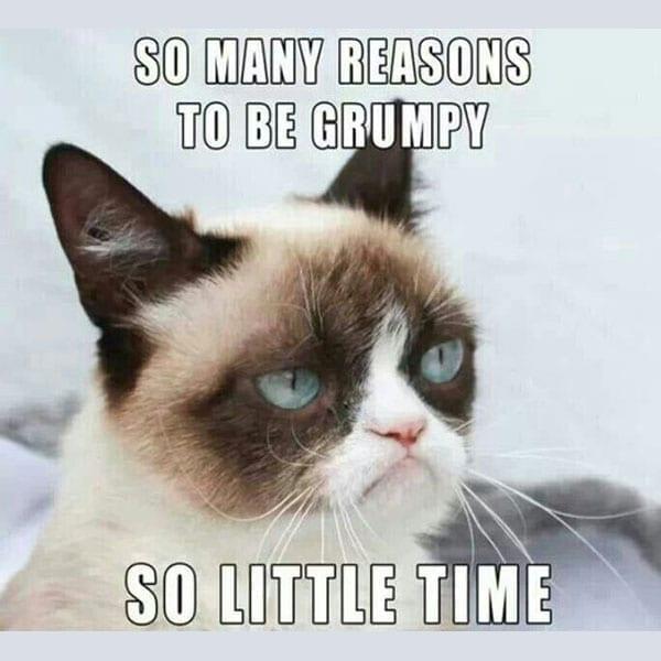 dank grumpy cat meme -1