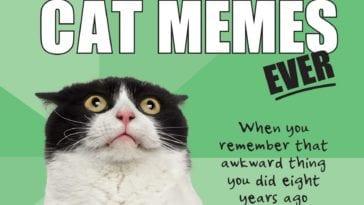 dankest cat memes -4
