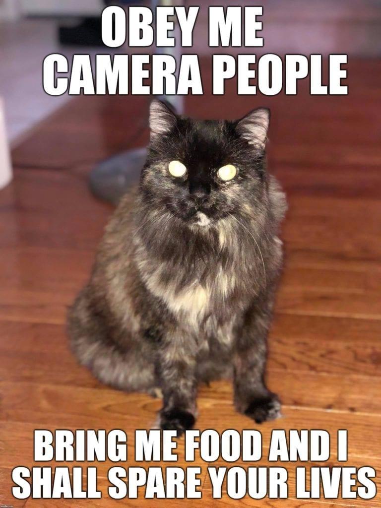 zombie cat meme 3