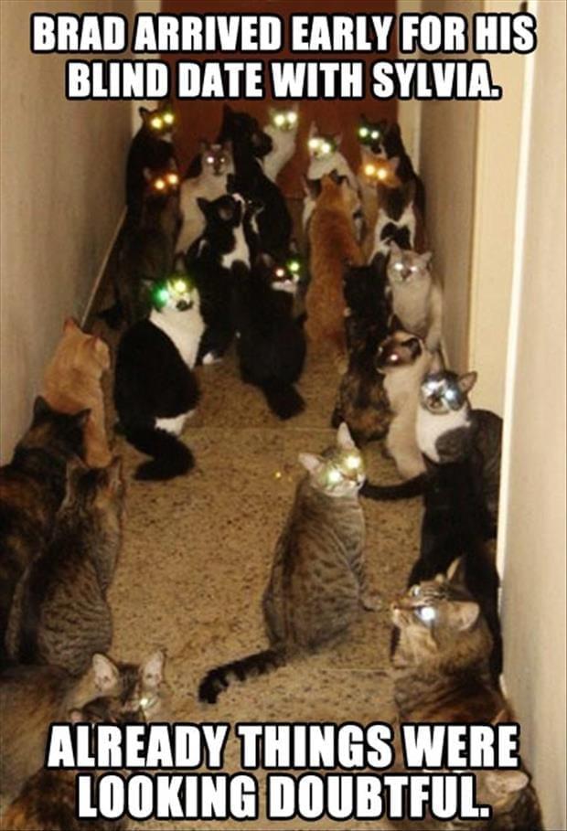 zombie cats meme