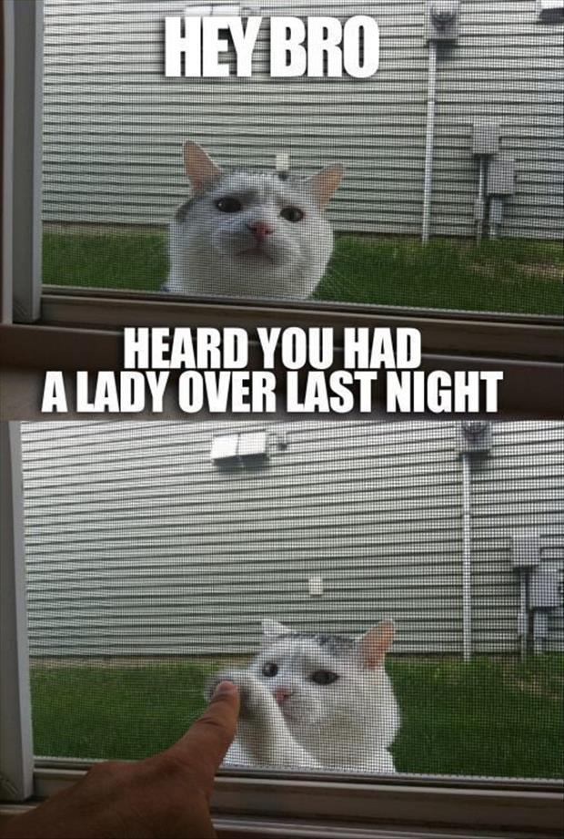 grumpy cat memes 2020