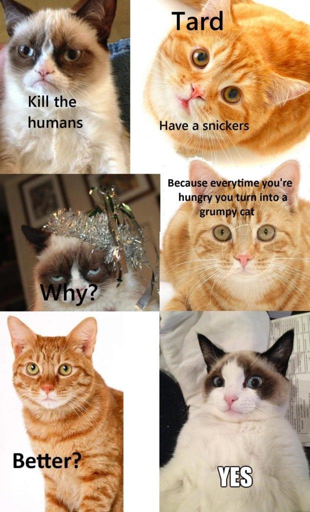 grumpy cat dank memes 2018-09