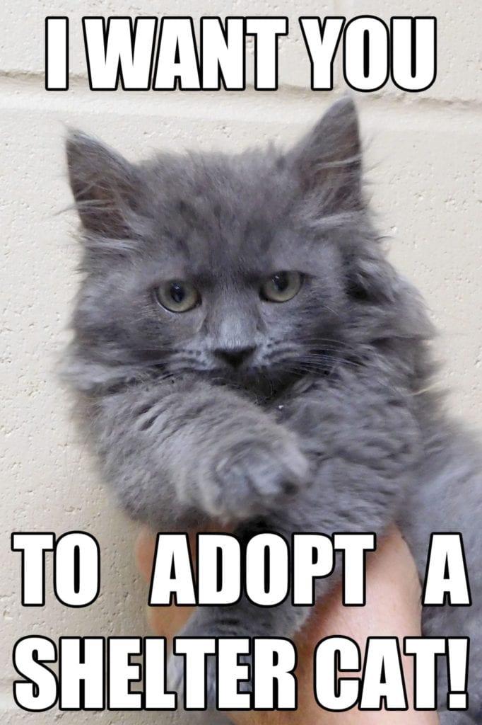 grumpy cat dank memes 2019-0987