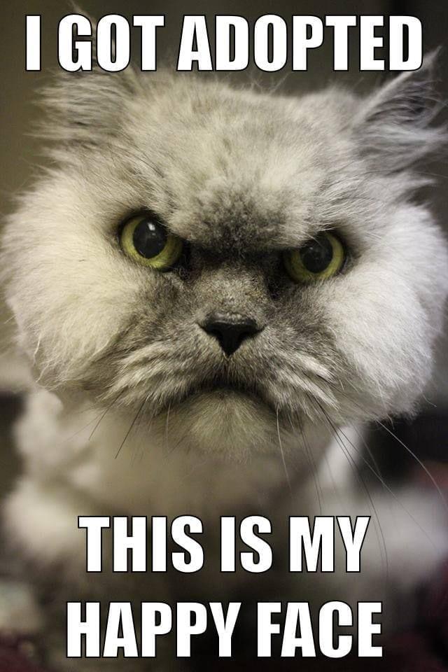 grumpy cat dank memes 2019-3