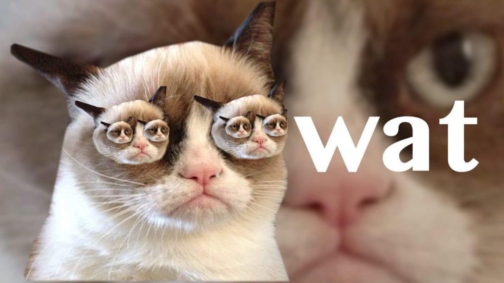 grumpy cat dank memes 2019