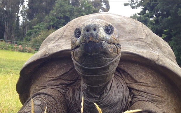 You Won't Believe How Old This Tortoise Was Before Giving First Bath