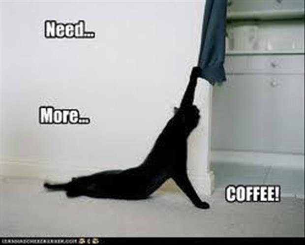 cat memes 012