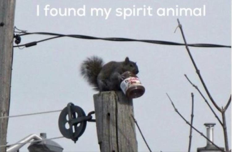 squirrel meme