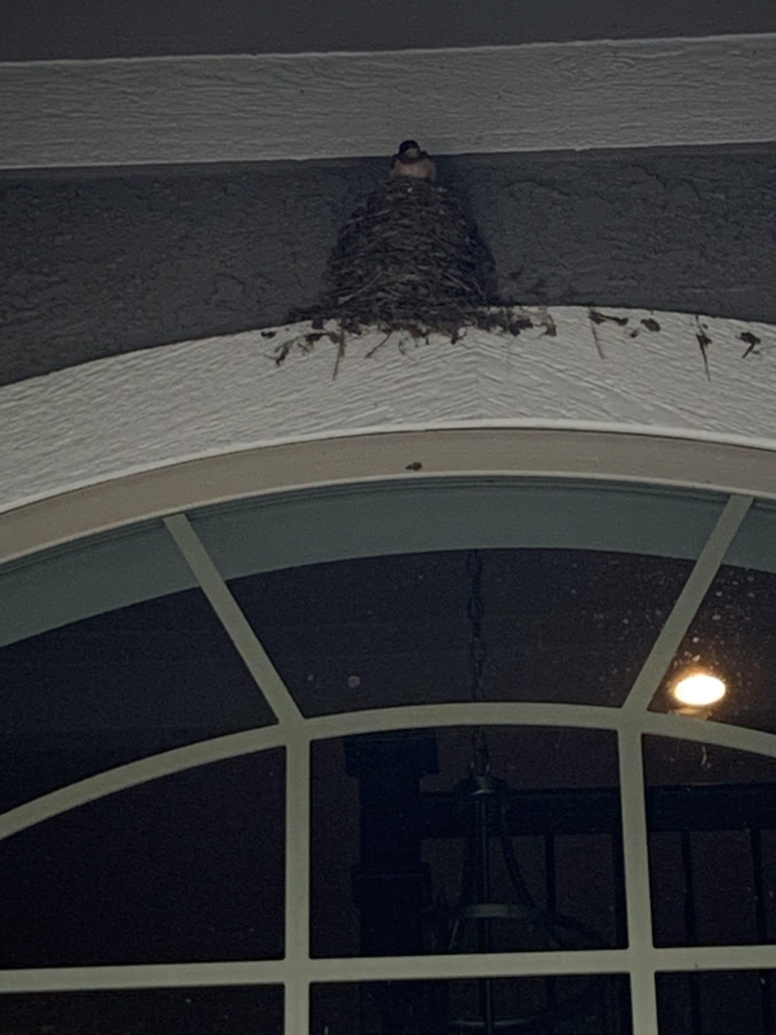 bird nest on door
