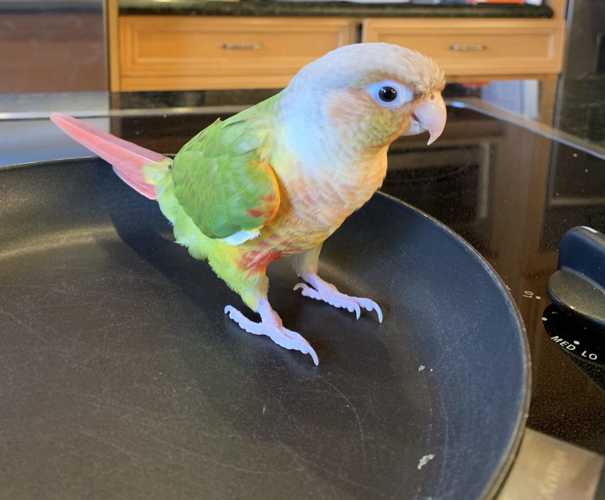 parrots 2020