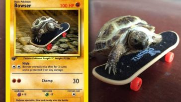 pokemon turtle card