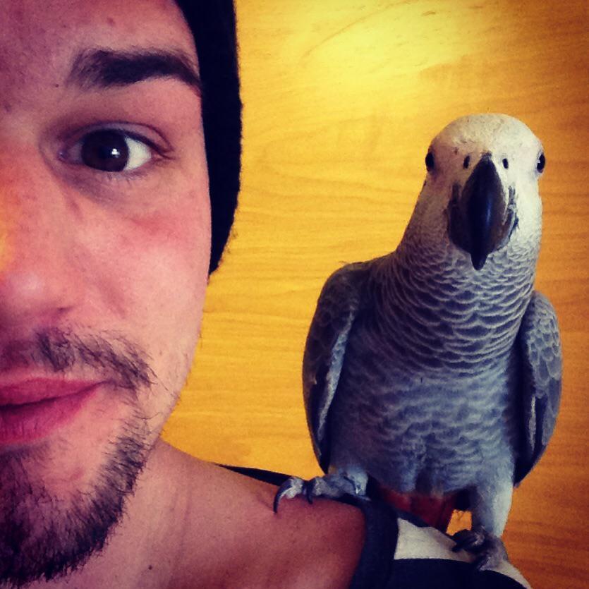 cute parrots 2032