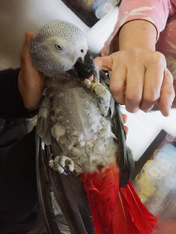 shelter parrots