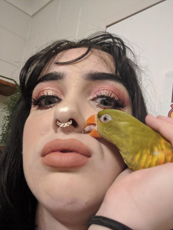 instagram parrots new pics
