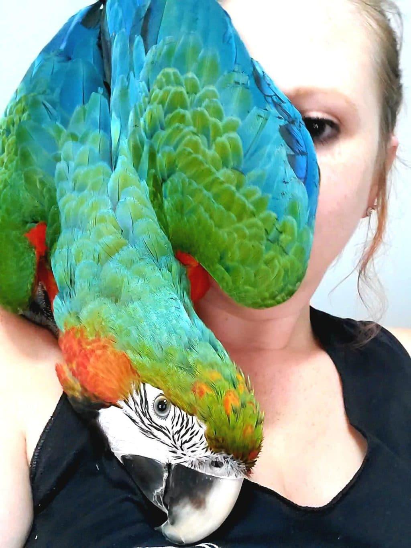 cute parrot pics -1