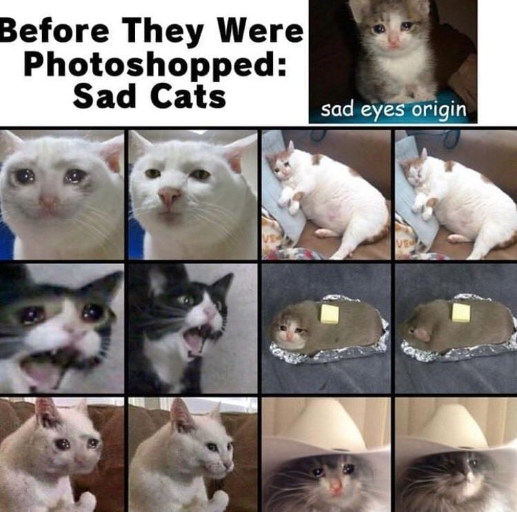 Crying Cat Memes Is The New Craze Among Catizens 30