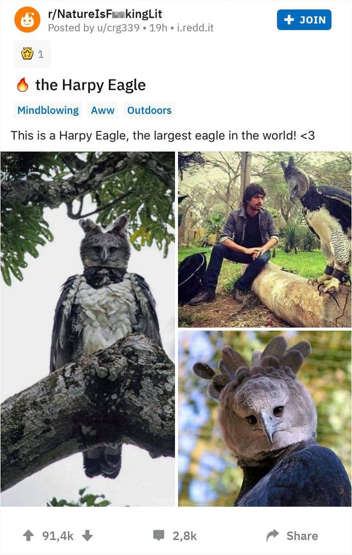 biggest birds on reddit