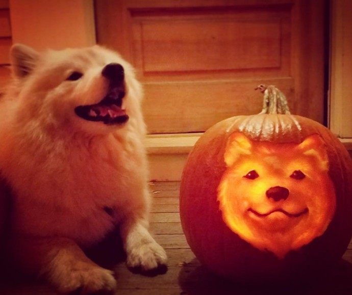 cute dog pumpkin carving