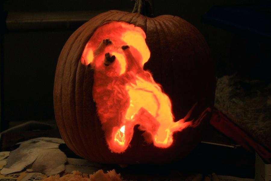 trick or treat dog themes