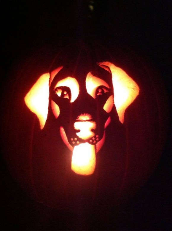 dog themed pumpkins -1hju7