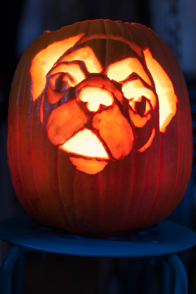 dog themed pumpkins halloween -1hge43