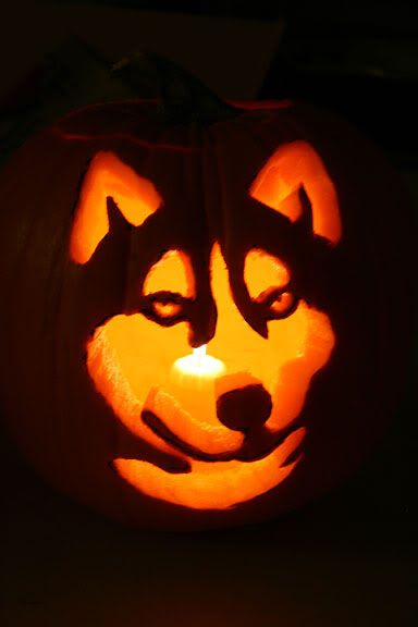 dog themed pumpkins -1jhu65