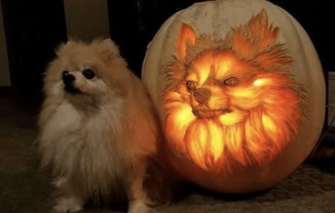 chihuahua pumpkin face