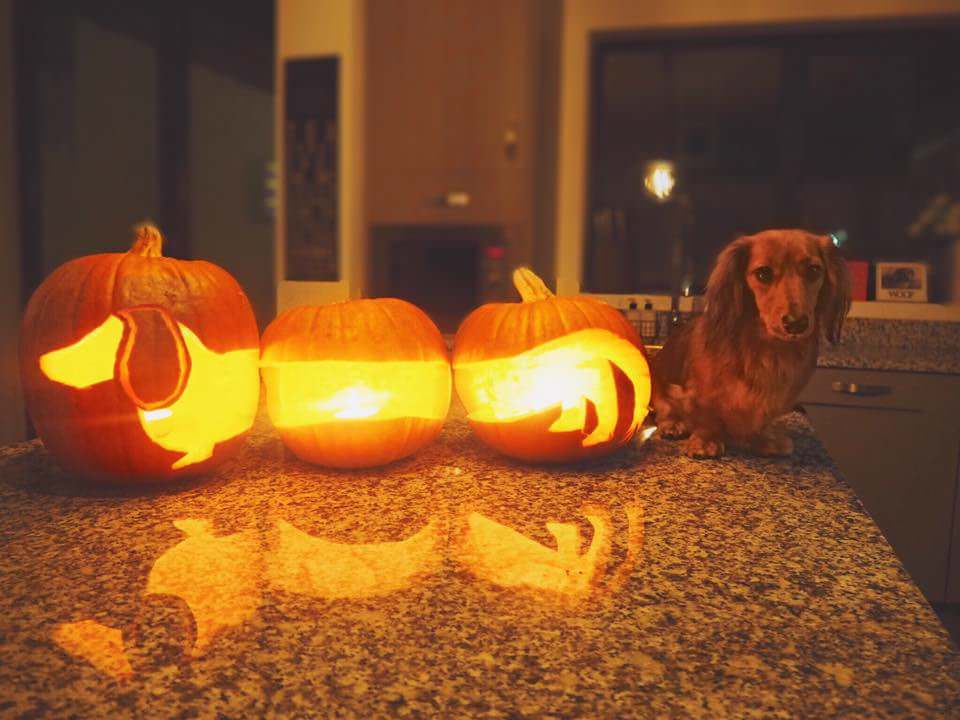 halloween dog carvings