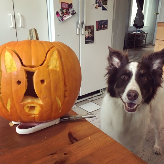 weird dog themed pumpkins