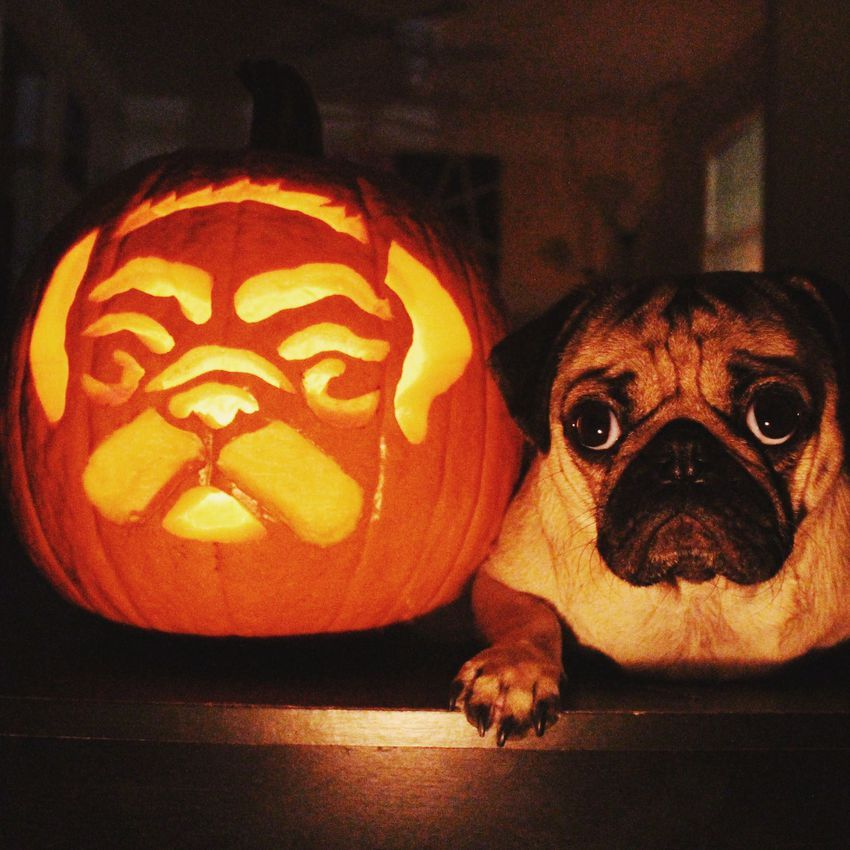 dog themed pumpkins 2019