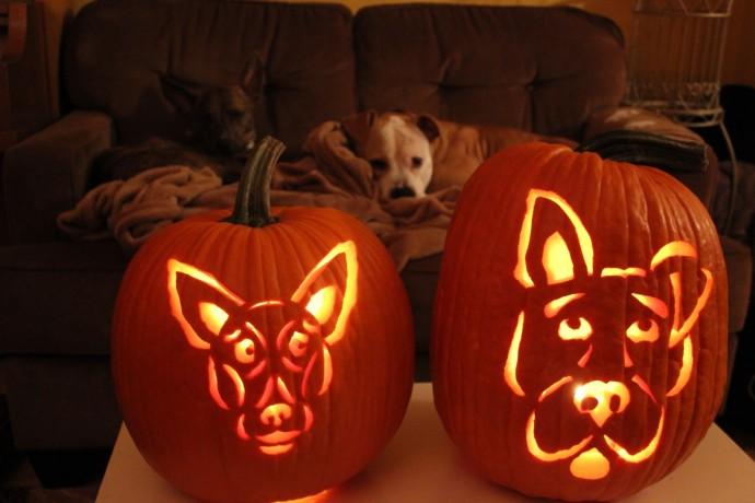 funny dog themed pumpkins