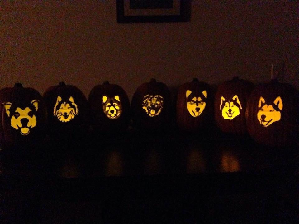 dog themed pumpkins -1