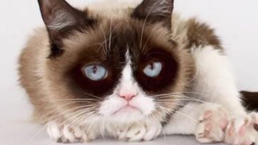 grumpy cat best memes ever