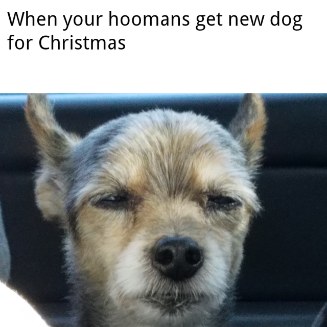 confused dog memes