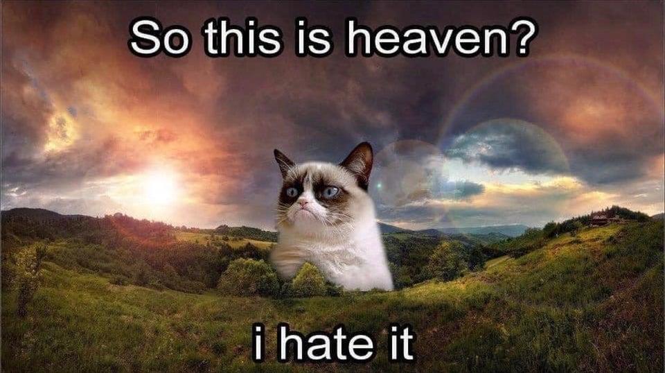 grumpy cat heaven memes