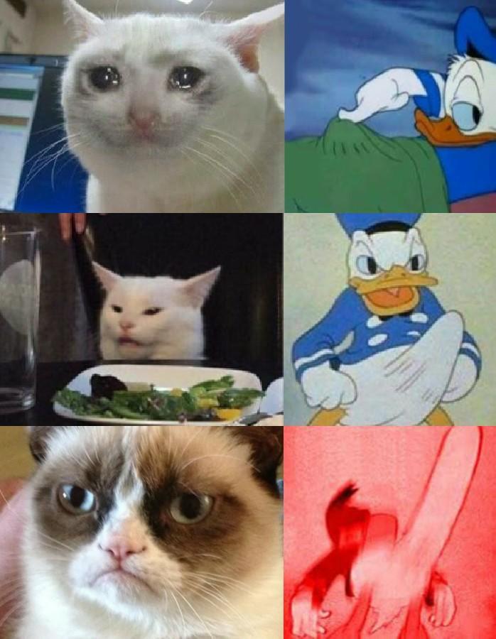 grumpy cat vs crying cat meme