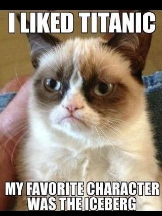 stubborn cat memes