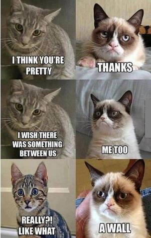 smart grumpy cat meme