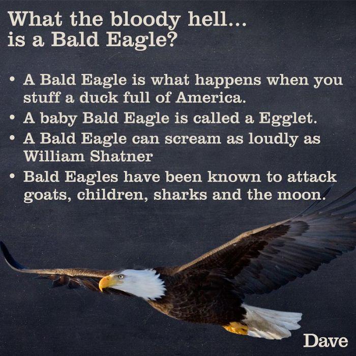 eagle facts funny