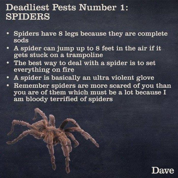 spider unknown facts